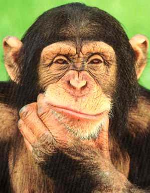 scimmia_pensa